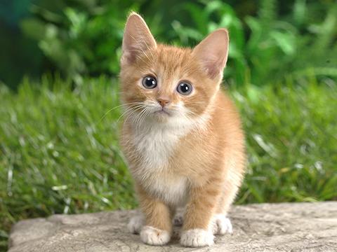 cat.jpg-137.1kB
