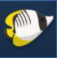 金斑少女鱼