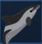 白喙斑纹海豚