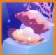 神秘的贝壳
